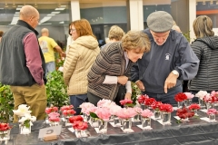 This year's show boasted 900 blooms and had 14 classes of camellias respresented. Tanya Ackerman/Coastal Observer